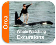 Don't Try This At Home - Orca Whales Are Wild Animals - Keep Yourself Away From The Whales At A Safe Distance At All Times  Whale Watching Tours And  Excursions Depart From Bellingham's Cruise Terminal And Squalicum Marine Downtown Bellingham